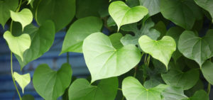 heart_leaves